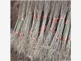 热销石榴苗,铁皮石榴苗优惠