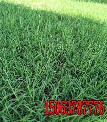 新闻:植草护坡客土喷播植草多少钱一公斤 【万春种业图片