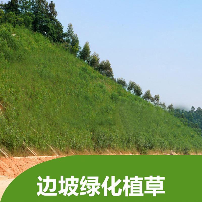 廣饒公路綠化護坡生產商