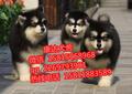 广州康达宠物用品有限公司