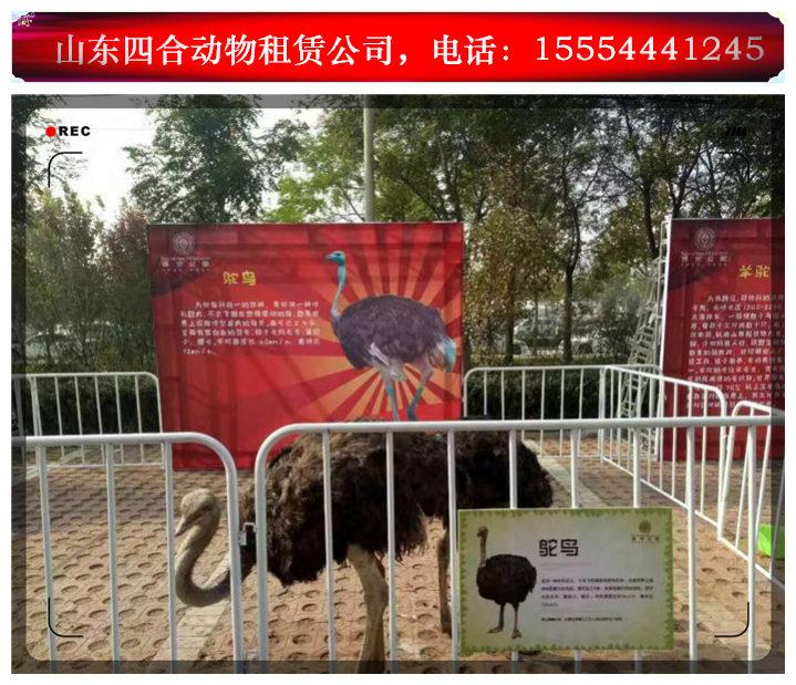原创海狮表演出租租赁马戏表演黑龙江宁安市。