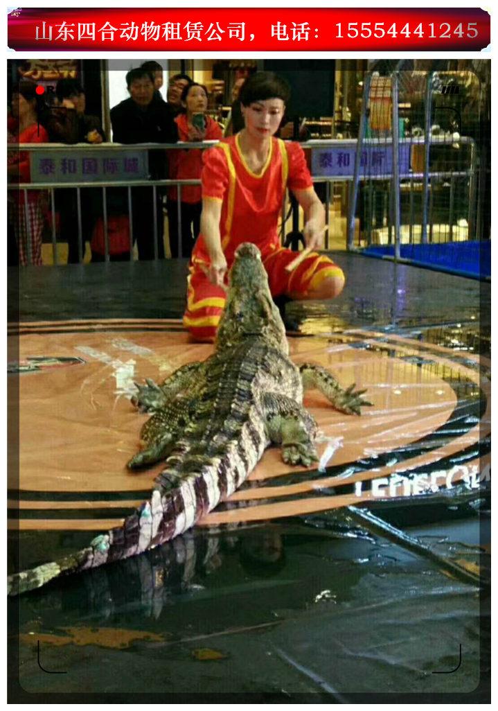 马戏团表演出租马戏表演黑龙江肇东市。