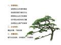 泰安开发区旭昇园艺场