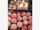 2018年红星苹果红将军苹果红露苹果大量上市