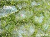 欢迎莅临:绿化三维植被网 价格更新__南阳市厂家