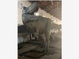 全国租赁恐龙模型 大型侏罗纪恐龙道具出租出售