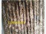 新闻:梧州板式换热器除垢清洗剂,合规电厂锅炉化学清洗公司