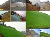 云南玉溪高速公路绿化工程种草喷播机
